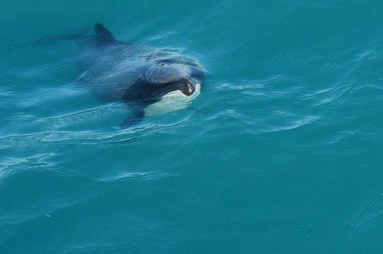 Whale Watch : Wild Dolphin
