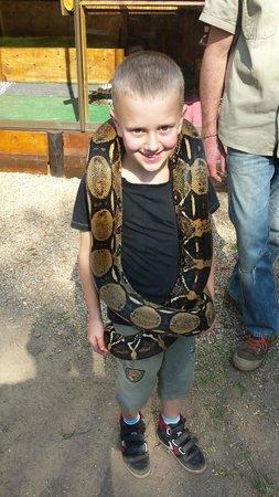 Lawnwood Snake Sanctuary : A very happy little chap!!!