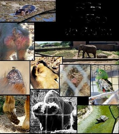 Parc Zoologique de Frejus : un aperçu