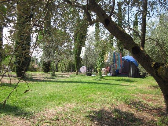 Campeggio Belmondo Montepulciano: Camping under olive trees