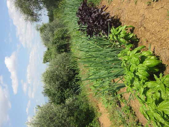 Campeggio Belmondo Montepulciano: Vegetable growing