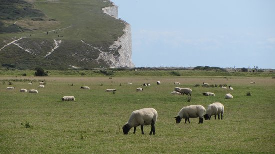 Seven Sisters Country Park : la campagne