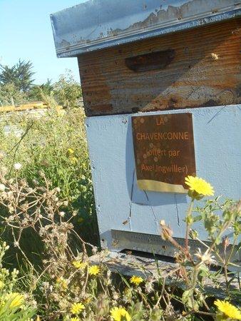 Miellerie de L'abeille de Re : Ruche