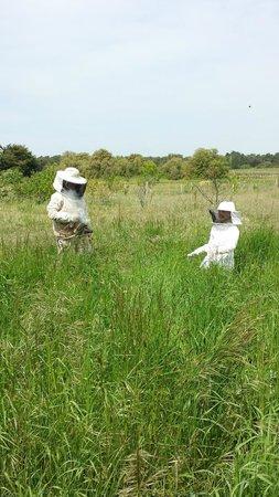 Miellerie de L'abeille de Re : Aventure aux ruchers