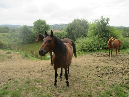 Domaine du Haul: Les chevaux.