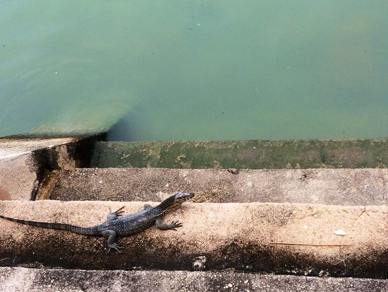 Malacca River: Wildlife!