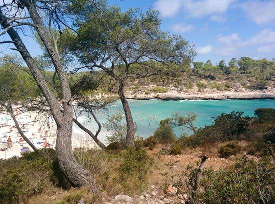 Playa de S'Amarador: Vista de la cala desde la zona arbolada
