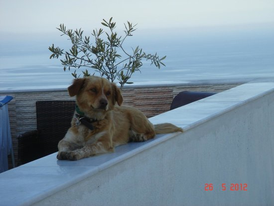 Nectarios Villa: Romeo - Nectarios Dog
