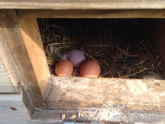 Humble Bee Farm: Fresh eggs for breakfast!