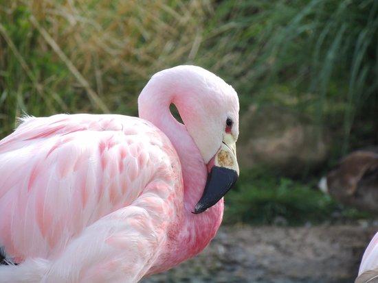 WWT Slimbridge Wetland Centre: Just one of the many flamingos