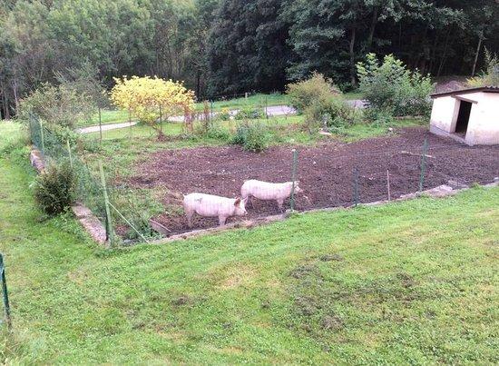 Domaine de Basil : Les cochons (visibles à l'entrée du domaine)