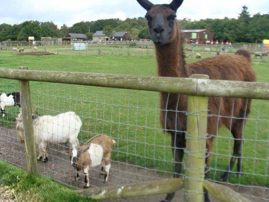 Matlock Farm Park: animal feeding