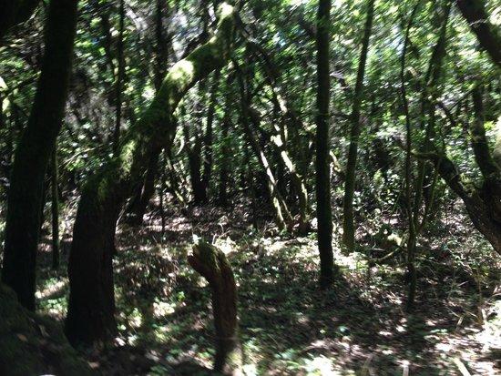 Garajonay National Park: rainforest