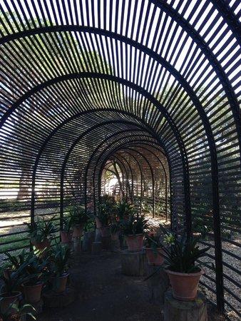 Babylonstoren Garden: Clivia tunnel