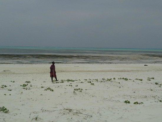 Hakuna Majiwe Beach Lodge: la spiaggia in bassa marea