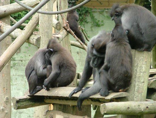 Newquay Zoo: Just monkeying around!