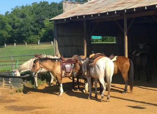 Lake Murray Riding Stables