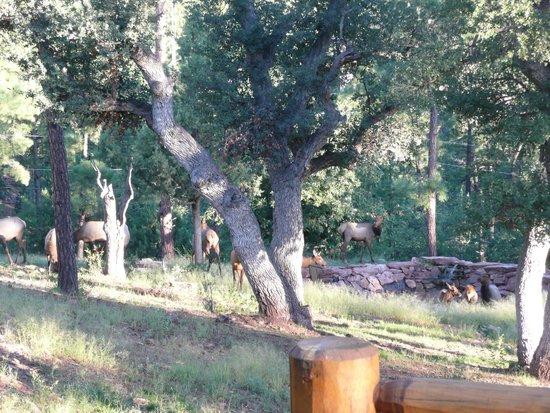 Individual Retreat Cabin At Southwest Nature Retreat Cabin