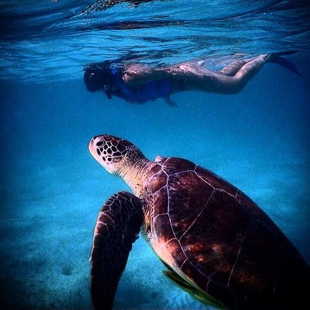 Riviera Adventours: Snorkeling with the turtles