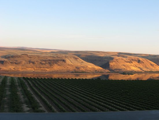 Maryhill Winery: Maryhill Vineyard & Columbia River Gorge at sunset