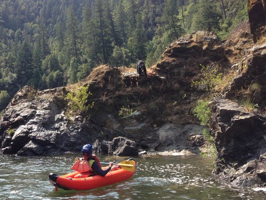 Morrisons Rogue River Lodge: Hello Mr Bear