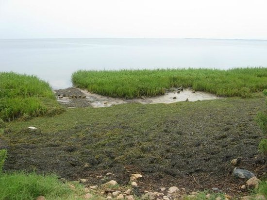 St. Marks National Wildlife Refuge: Another view of the shore