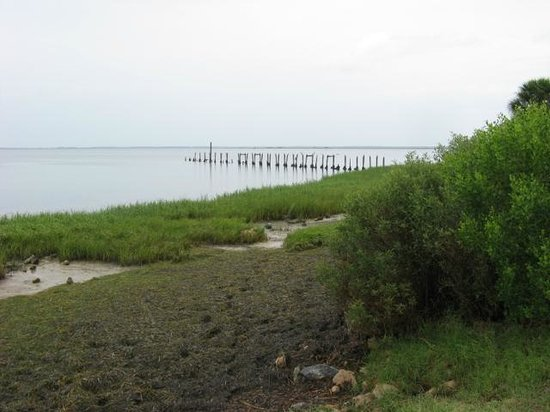 St. Marks National Wildlife Refuge: The shoreline at St. Marks