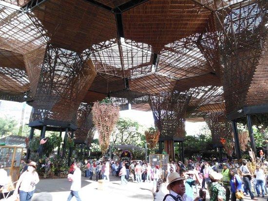Entrada picture of jardin botanico de medellin medellin for Jardin 81