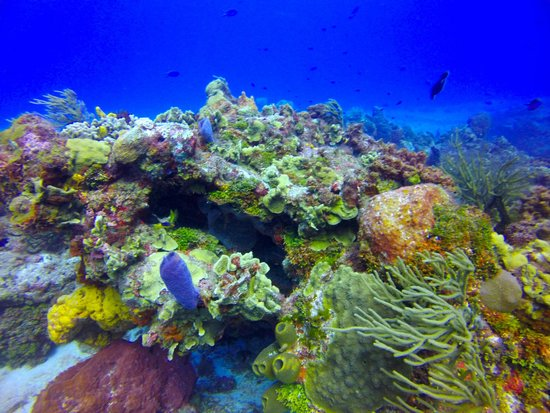 ScubaTony Cozumel: gorgeous colors