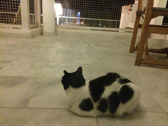Marina Bayview: The hotel cat