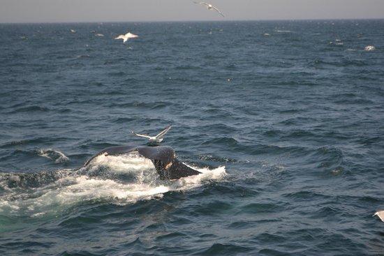 New England Aquarium Whale Watch : le riconoscono dalla coda