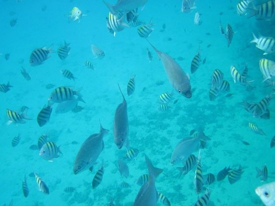 Angel Fish Cove : Angel Fish Cov