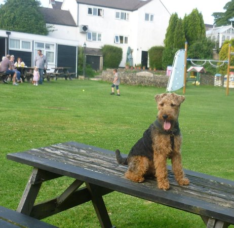 Swinscoe, UK: Ted enjoying his stay
