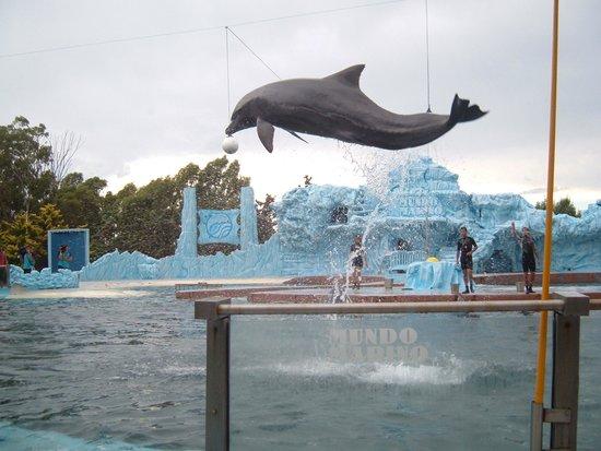 Mundo Marino: show de los delfines
