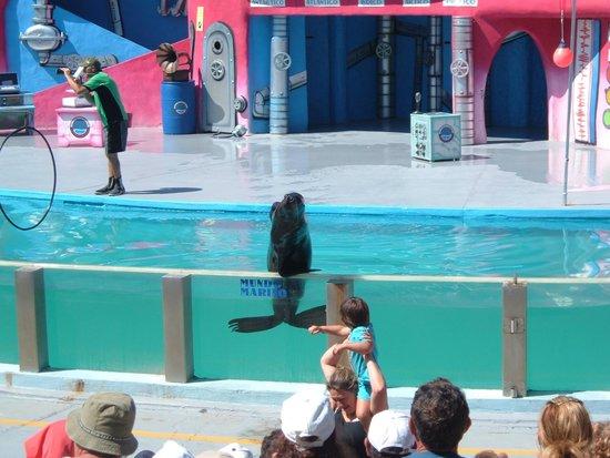 Mundo Marino: show de los lobos marinos