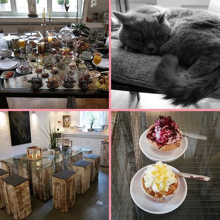 B & B Cologne Filzengraben: Breakfast (for two), Mieze (the resident cat) and the cupcake cafe