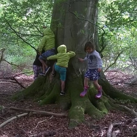 Luckley Holiday Cottages: Children romp around tree during a personal tour of Luckley Farm estate courtesy of the Propriet