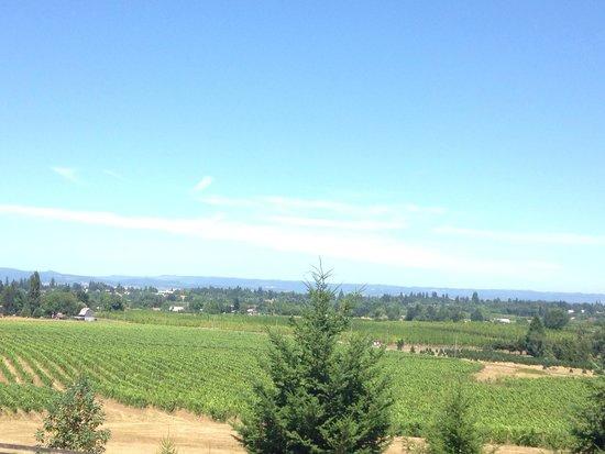 Saffron Fields Vineyard : July 2014