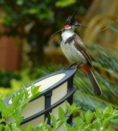 The Nest Inn: Bird in garden