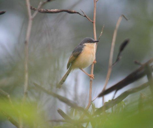 The Nest Inn: Bird around nestinn