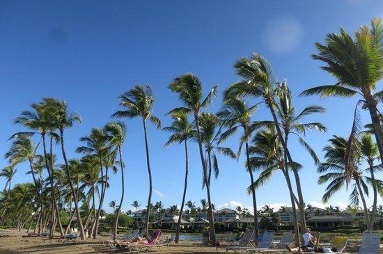Kolea at Waikoloa Beach Resort: A' Bay palms