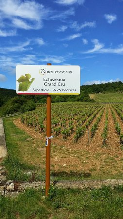 Authentica Tours : vineyards in Bourgogne