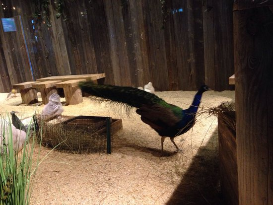 Shinok: Big bird