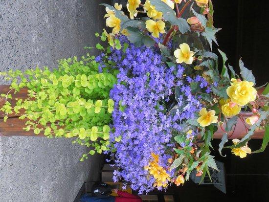 Mt. McKinley Princess Wilderness Lodge: Las magníficas flores.