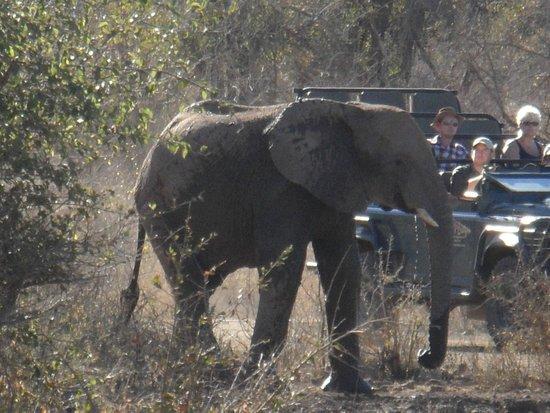 Jaci's Safari Lodge: On Safari