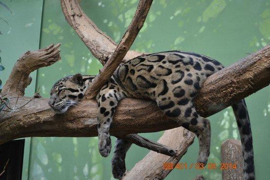 Prager Zoo: Милая киса