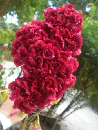 Velidhu Island Resort : Blume