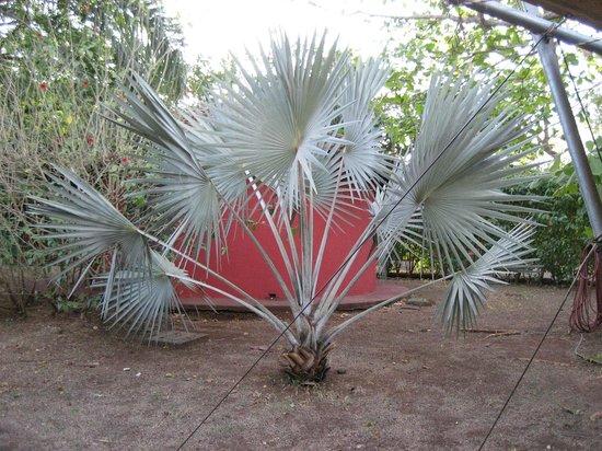 Hotel Mauna Loa : The plants are gorgeous!