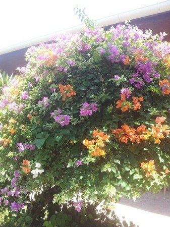 Thai Garden Resort: Flowers