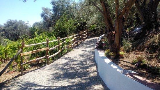 L'Uliveto: vialetto che porta alla piscina